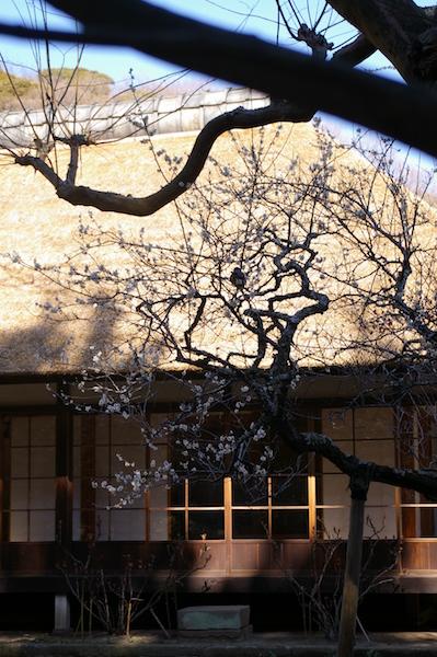 鎌倉の花_前9