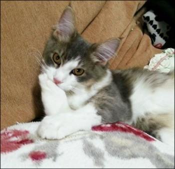 素敵女医 免疫力 猫