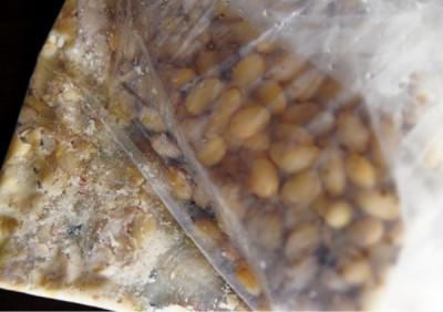 ザルを使ってゆで汁をしっかりときります(ゆで汁は別にとっておいて)。粗熱が取れたら厚手のポリ袋に入れ、温かいうちに手でつぶします。豆の形が完全になくなるまでしっかりつぶして