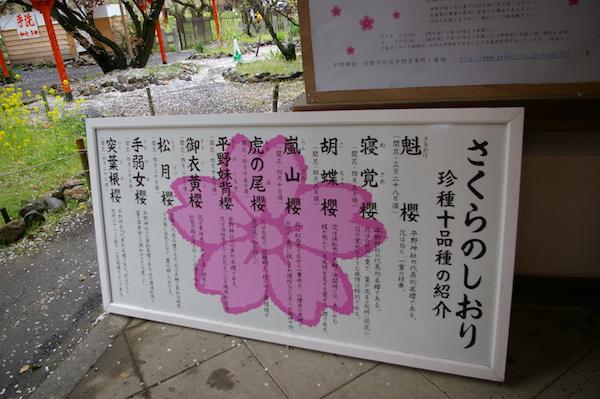 小野_桜_4