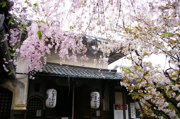 京都・わたしの好きな桜の名所