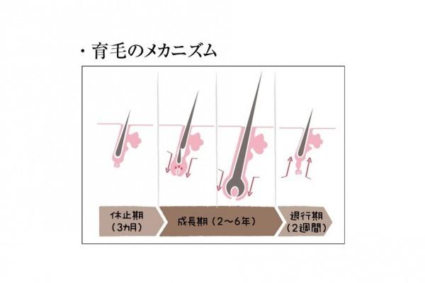 髪と頭皮のために今すべきこと10/<その4>頭皮エッセンスが、やせ髪、白髪の加速を防ぐ!①