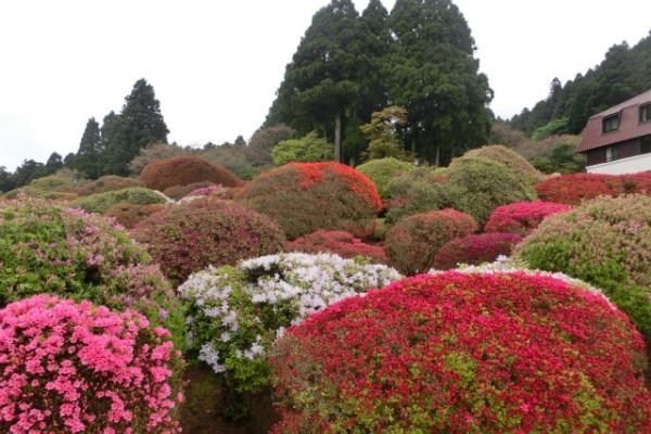 新緑の箱根〜成川美術館と山のホテルのつつじ・しゃくなげフェア