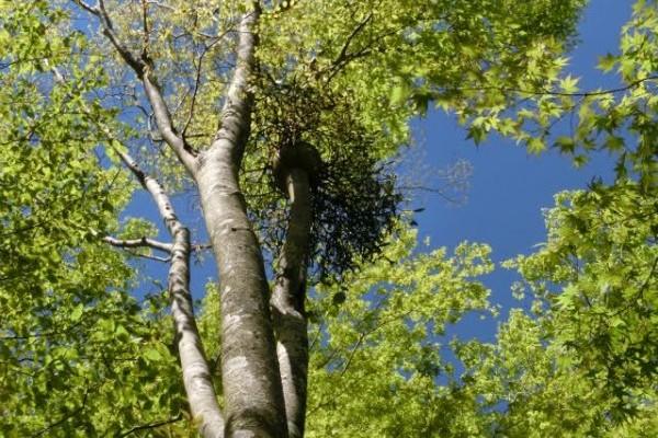 新緑の箱根の楽しみ方。箱根湿生花園と大涌谷の現在