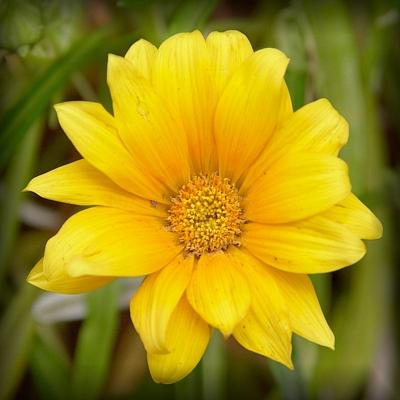 白井黄色花10jpg