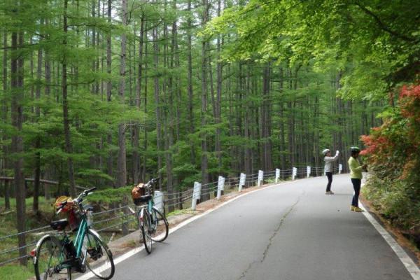 奥日光千手ヶ浜へクリンソウを見に自転車ツアー