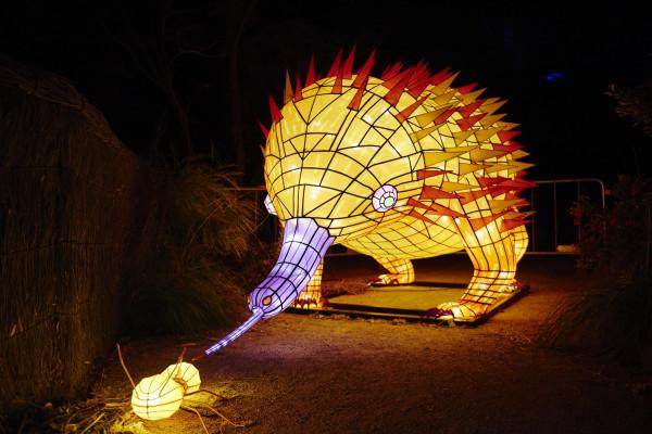 小野さん vivid sydney 4189 Taronga Zoo