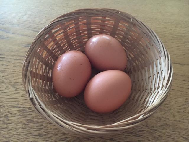黒川-3-egg