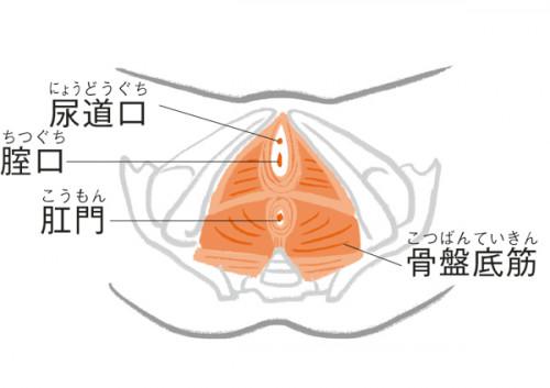 骨盤底筋には尿道口、腟口、肛門の3つの穴があり、その中でいちばん大きくて、緩みやすいのが腟。若いときにはキュッと締まっていますが、加齢とともにゆるゆるに…。経腟出産した人は出産経験がない人に比べ、入り口も内側も広がりやすくなります