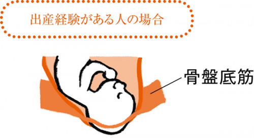 MyAge_010_120-骨盤底筋妊娠&出産イラスト1