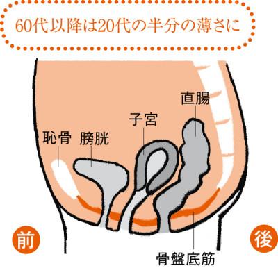 骨盤底筋がさらに緩んで薄い状態に。子宮や膀胱、直腸はひと回り小さくなり、下垂ぎみに