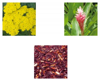 (写真上右)オーガニックジンジャー (写真上左)バイオダイナミックノコギリソウ (写真下) フェアトレードバイオレットライス 自社農場で育てたナチュラル、オーガニック、バイオダイナミックの植物成分を高配合
