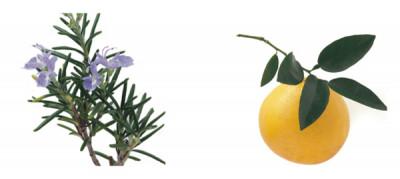 収れん作用のあるローズマリー、抗菌作用のあるグレープフルーツの精油を使用