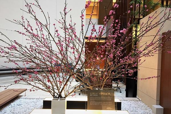 お花見重アフタヌーンティーで春をいただきます