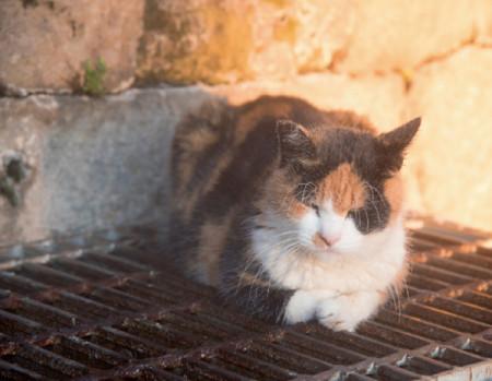 横森さんスペシャル ネコ