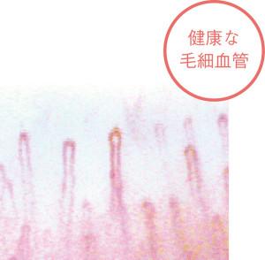 毛細血管_photo