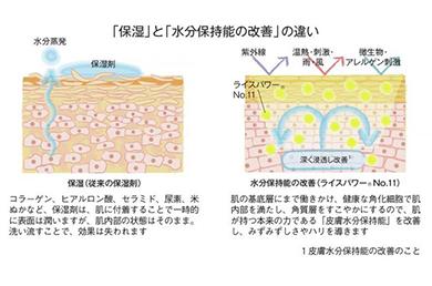 肌の「保湿」と「水分保持能の改善」の違いとは?
