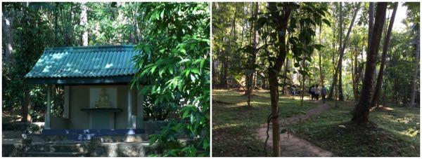 srilanka ayupiyasa woods