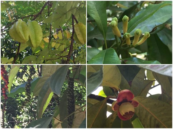 srilanka spice&fruits