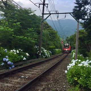 小暮あじさい箱根登山鉄道