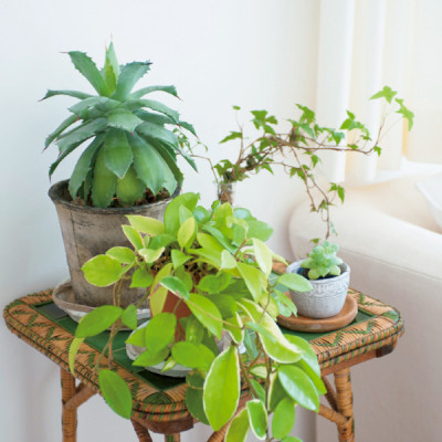 藤原さん 植物