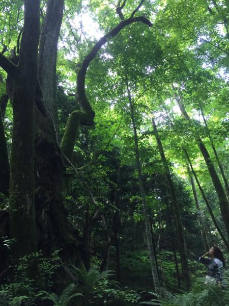 横森さん 木々 58720380