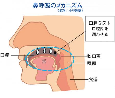 MyAge_012_187-鼻呼吸のメカニズムイラスト