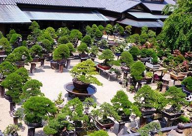 朝倉さん 盆栽園