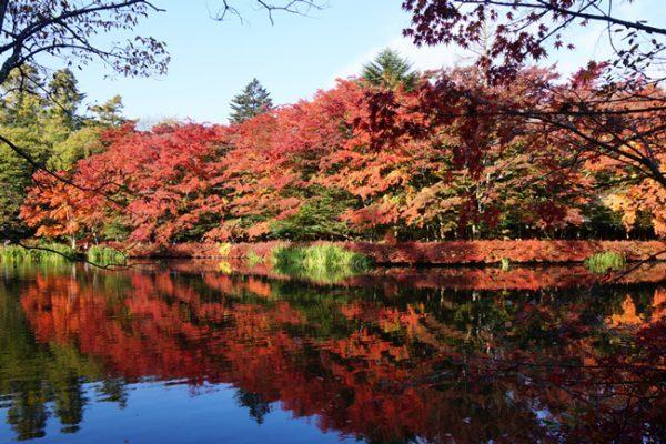 軽井沢で一番美しい「雲場池」の紅葉を見に行きませんか?