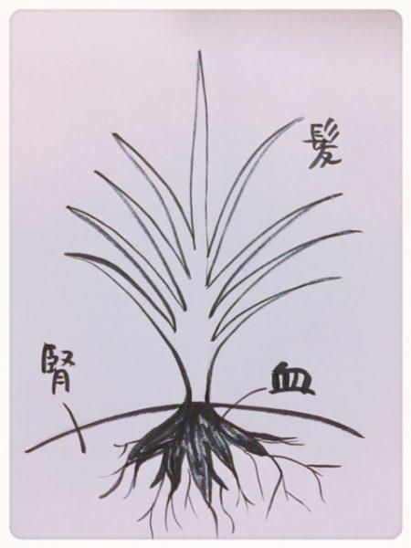 樫出さん 髪の図