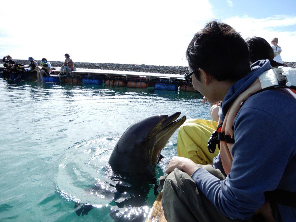 石垣島で楽しむ大人時間とドルフィンスイム体験