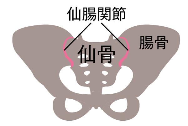 骨盤まわり 仙腸関節