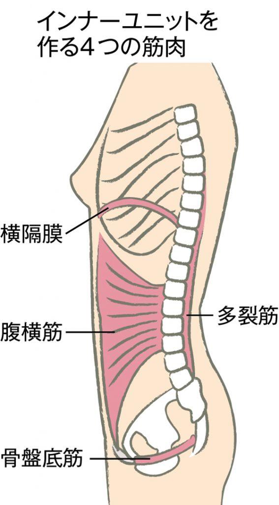 骨盤まわり 筋肉