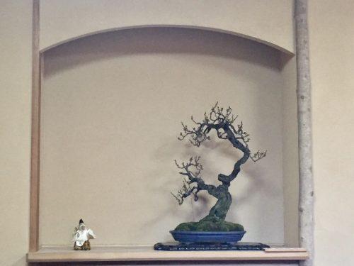 朝倉さん 先生の盆栽