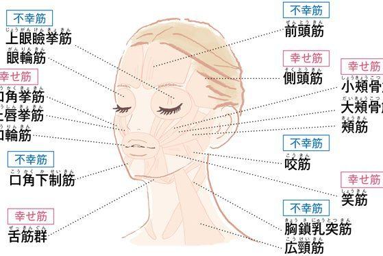 幸せ筋アップ&不幸筋膜はがしで顔面を引き上げる!