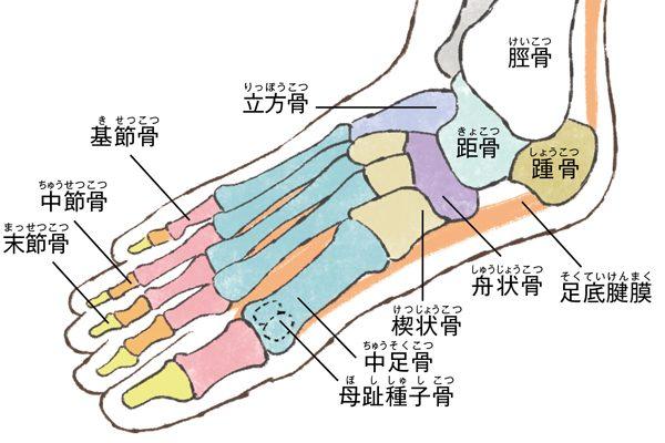 更年期に急増する「足の悩み」④足の痛みや変形トラブルは「アーチの崩れ」が原因