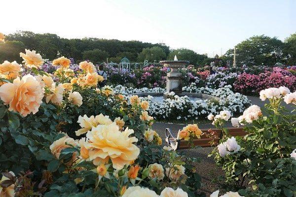 京成バラ園とカジュアルランチ