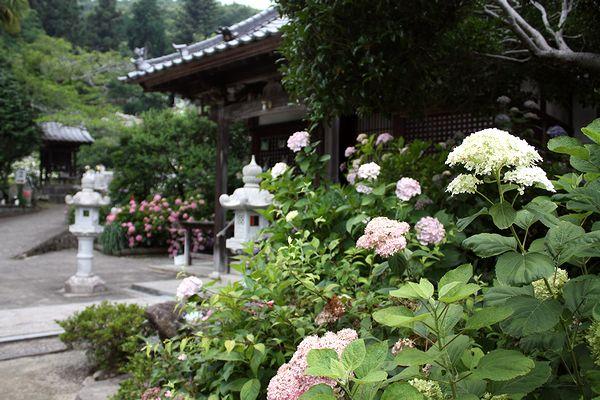 """広島県府中市のあじさい寺""""神宮寺""""へ、花の写真を撮りに。"""