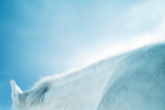 松本千登世 /白髪から自由になれる「予感」