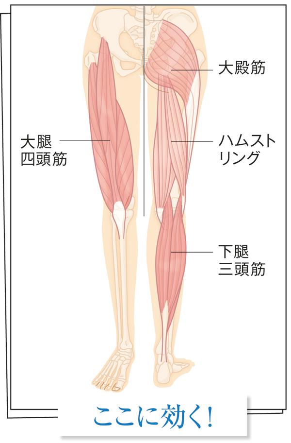 筋肉貯金 脚の図