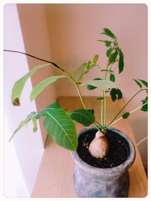 樫出さん 植物