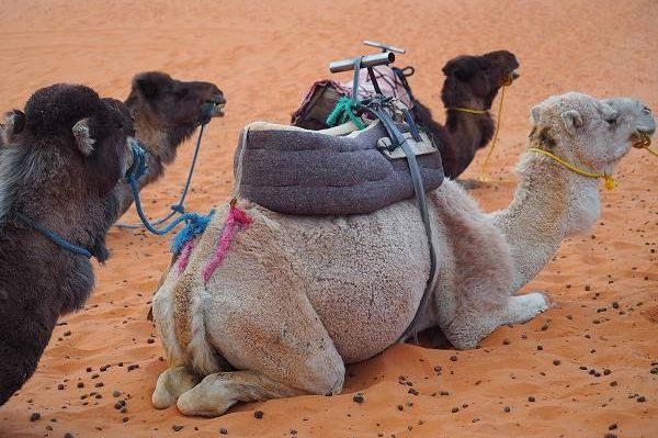 モロッコで異国情緒を満喫する旅  その3 砂漠とハリウッド映画のロケ地へ