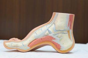 更年期の不調 4:「足のトラブル」②まずは、あなたの足のタイプはどれ?