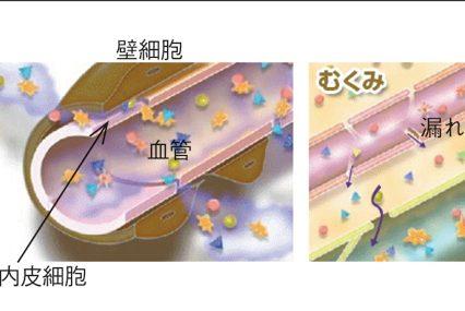 医療と美容の最先端!? 「毛細血管ケア」がますます重要な理由/後編 毛細血管力を左右するタイツーとは?