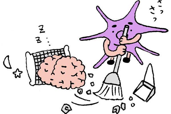 脳のゴミ出し機能をフル稼働させる眠り方は?/Dr.根来の体内向上プロジェクト