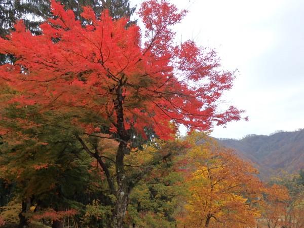 【山形県尾花沢市】銀山温泉で紅葉狩り