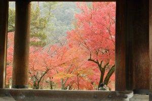 【京都府東山区】散り紅葉の美しさを見るのは、朝の時間