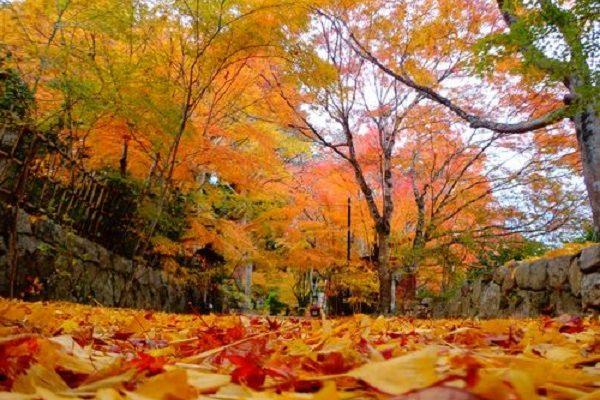 【滋賀県】滋賀県の紅葉の名所、「湖南三山」