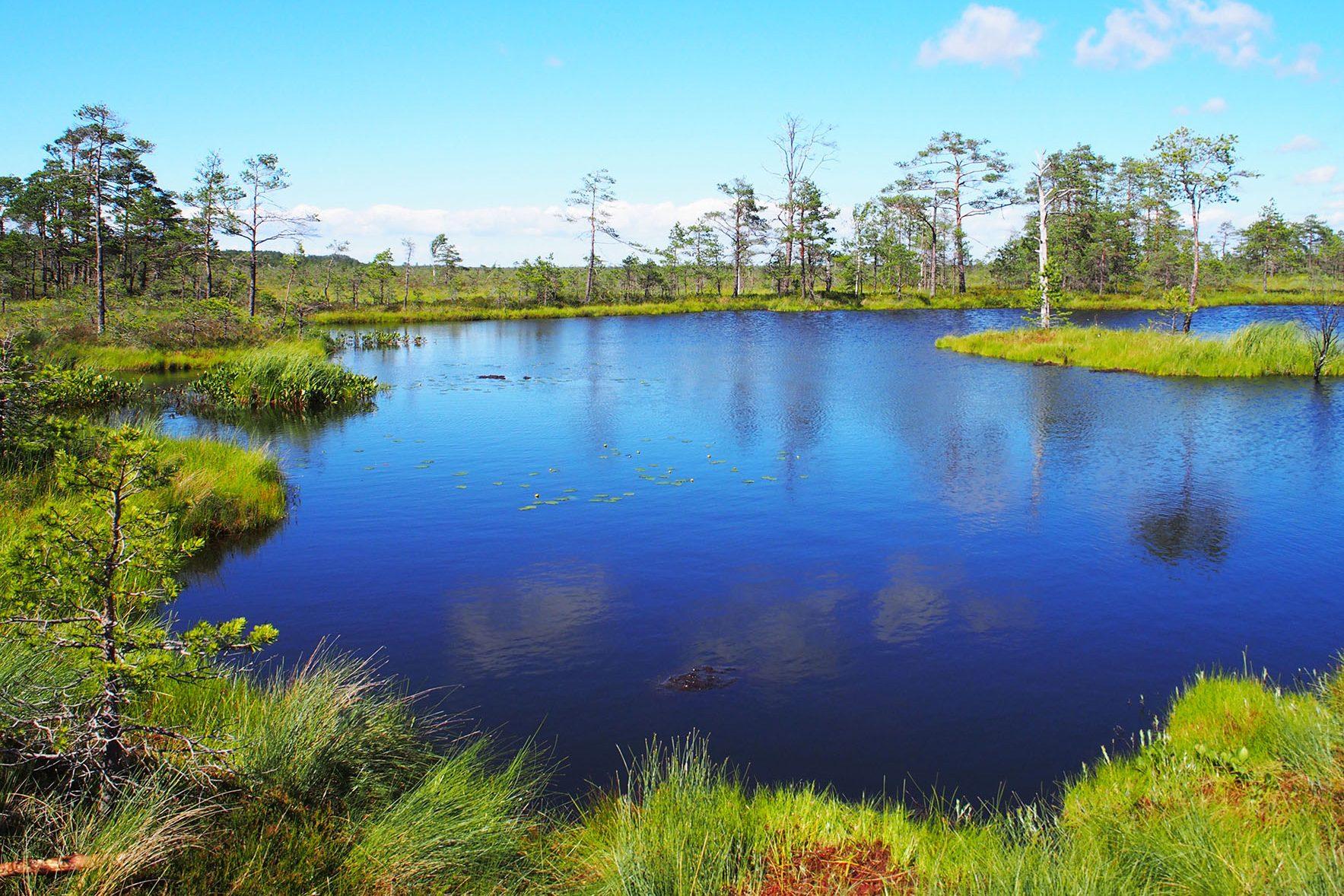 エストニアの湿原でハイキング!