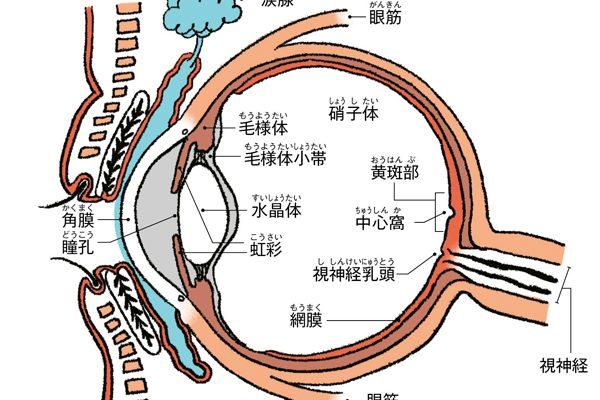 遠くが見える「過矯正」が目の老化を早める!?
